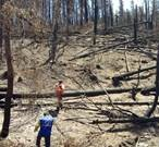 EUCPT Mission to Chile - Technical report on Forest fires